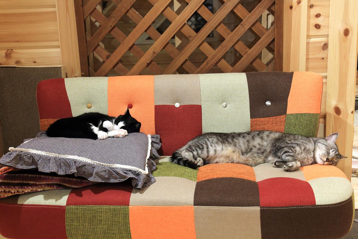ソファーに寝そべるチノピノ