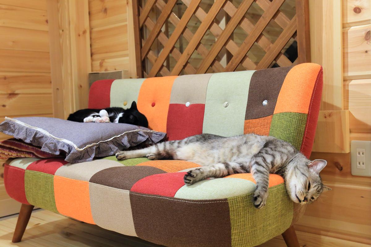 ソファーから落ちそうなチノ