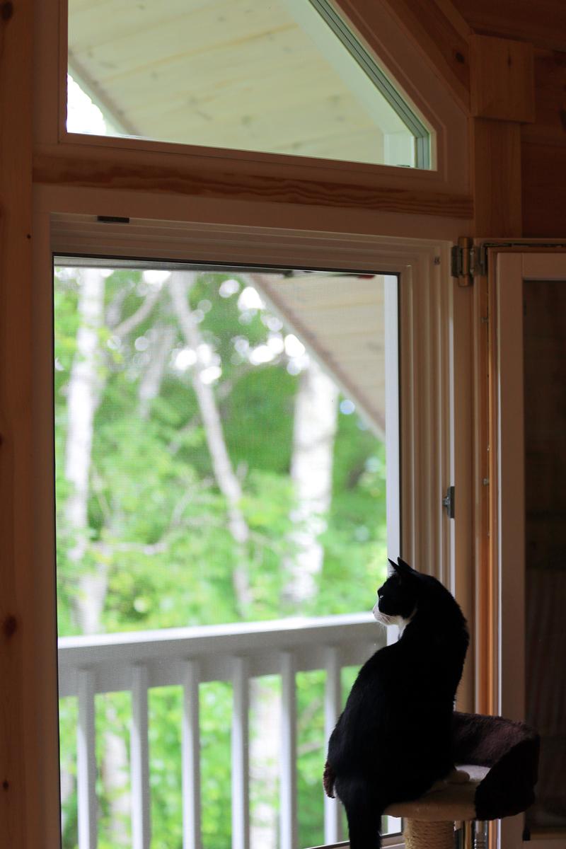 窓の外を眺めるピノ