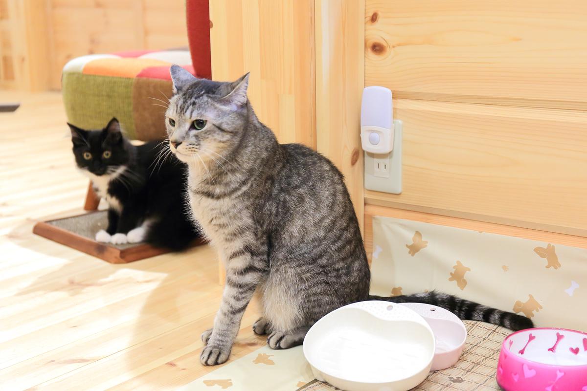 ご飯皿の前で佇むチノとそぼろ