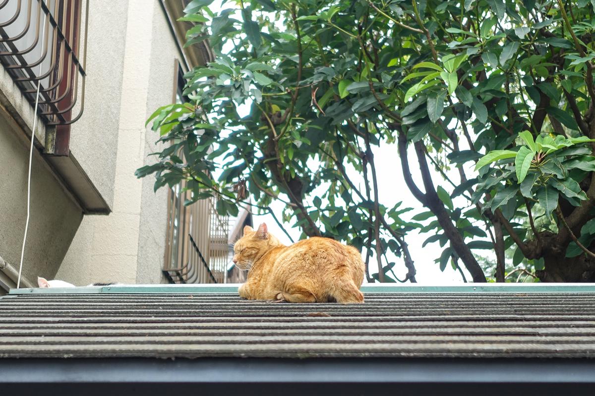屋根でくつろぐトラ猫
