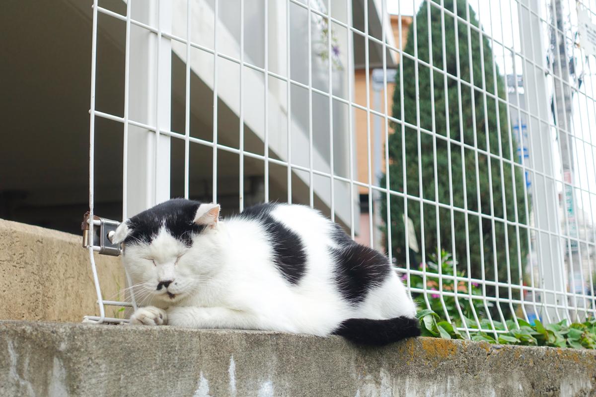 ぐっすり寝ている白黒ネコ