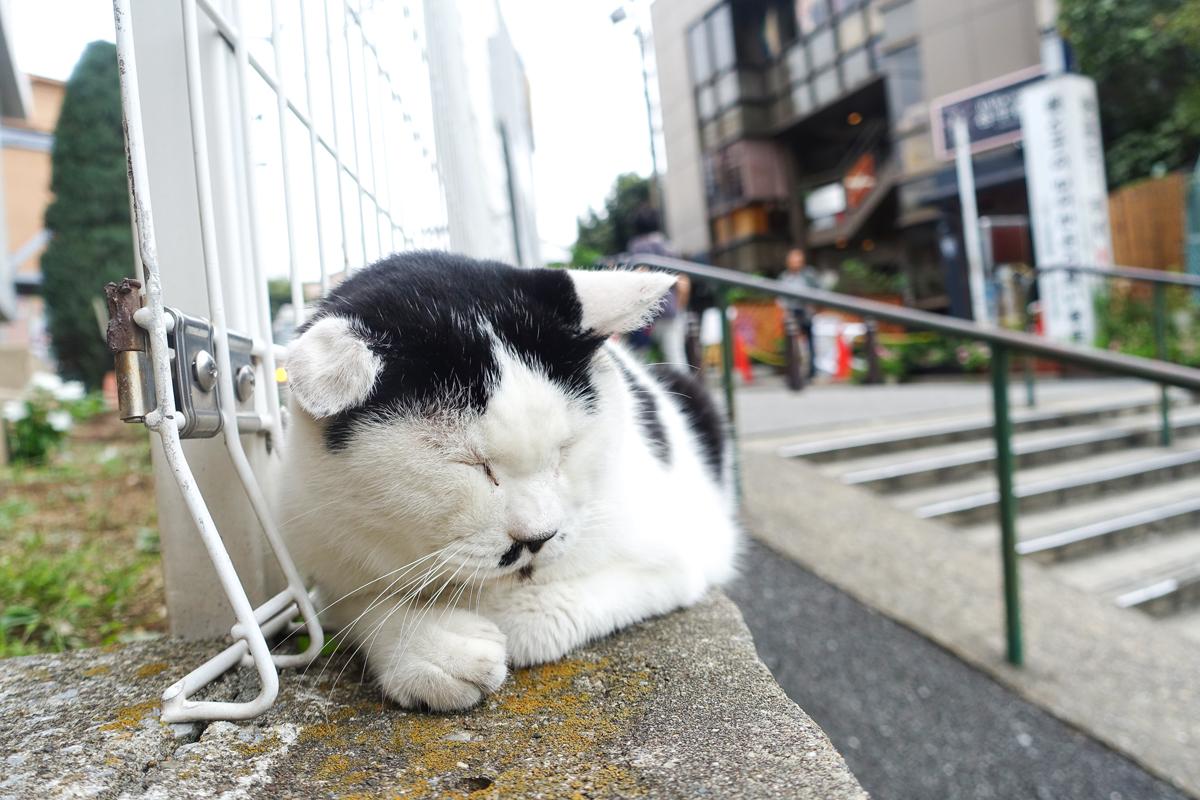 至近距離から撮影しても全く起きないネコ
