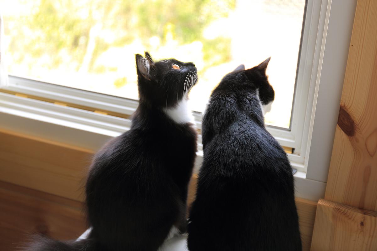 網戸越しに外を眺めるピノとそぼろの背中