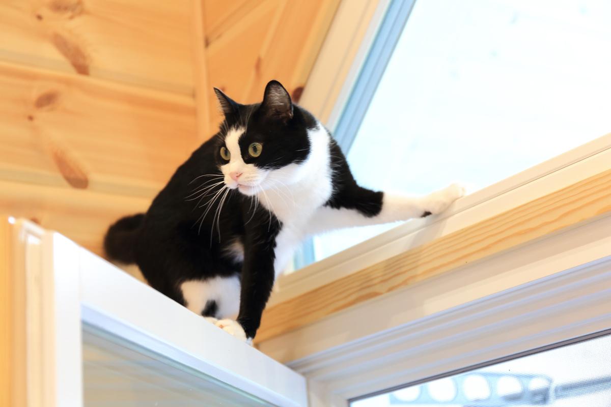 窓枠に登るピノ