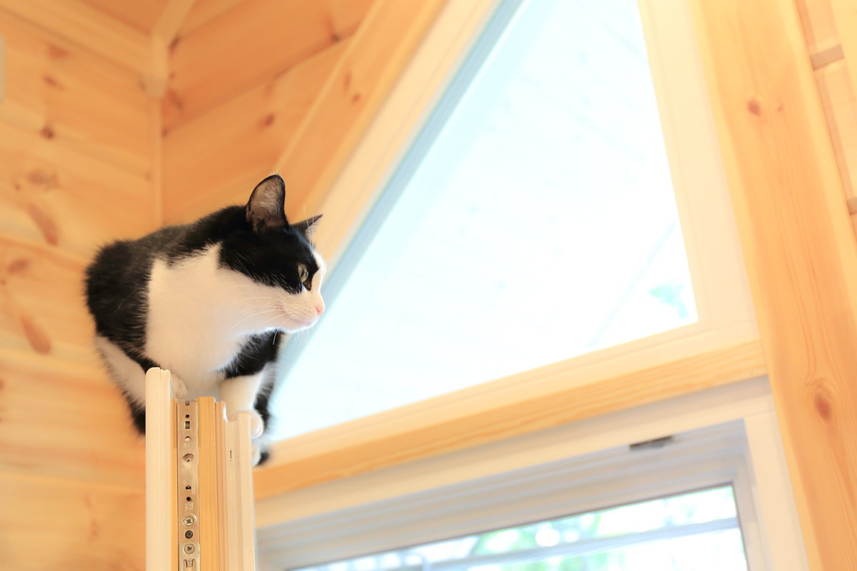 窓枠の上でくつろぐピノ