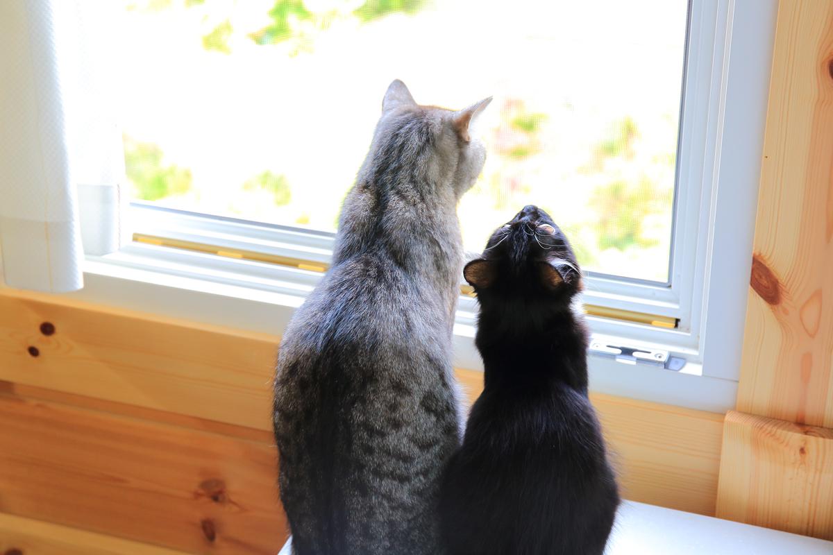 外を眺めるチノとそぼろの背中