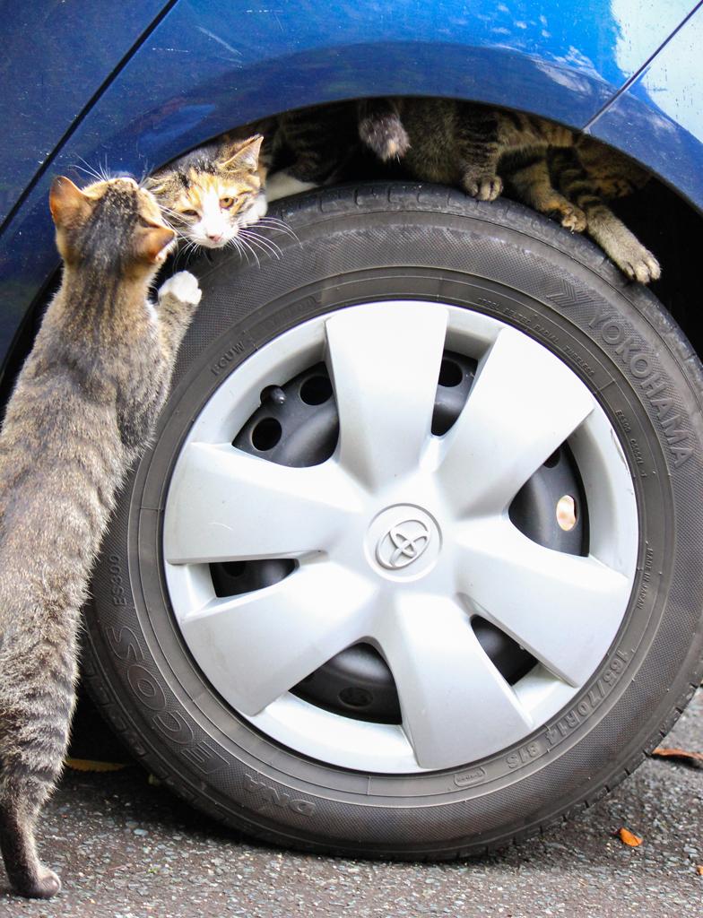 車体とタイヤの隙間で遊ぶ3匹のネコたち