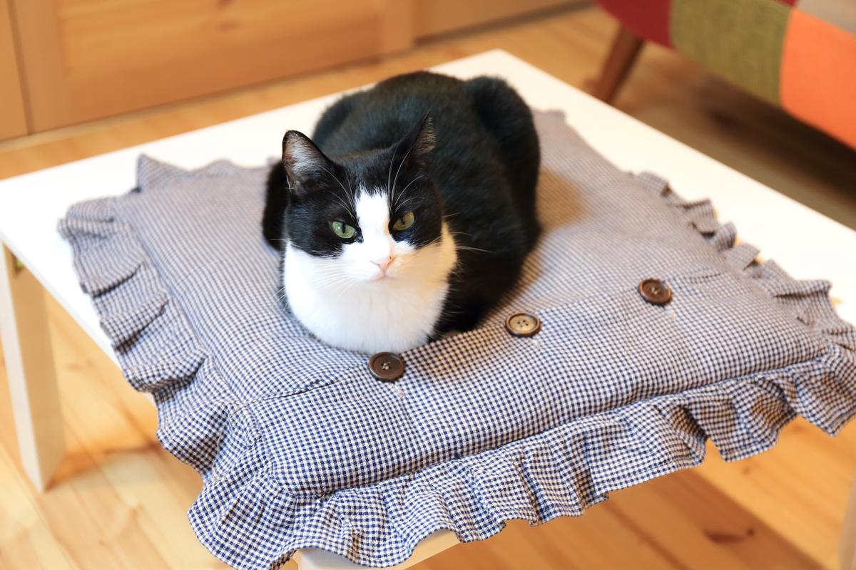 テーブルの上でちょこんと座るピノ