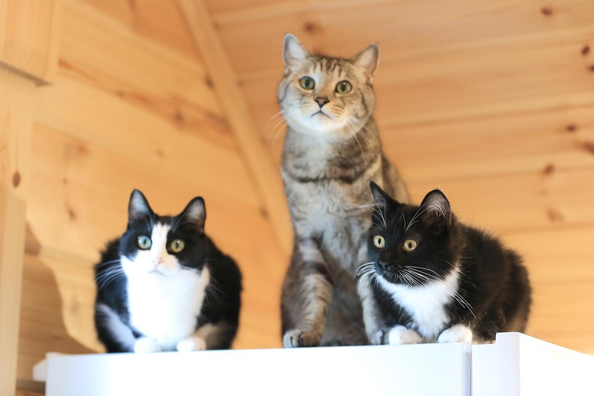 冷蔵庫の上に3匹集合