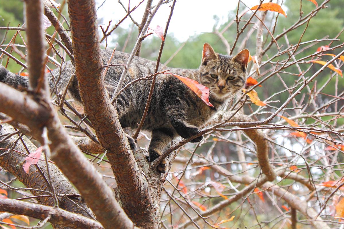 木に登る子ネコ