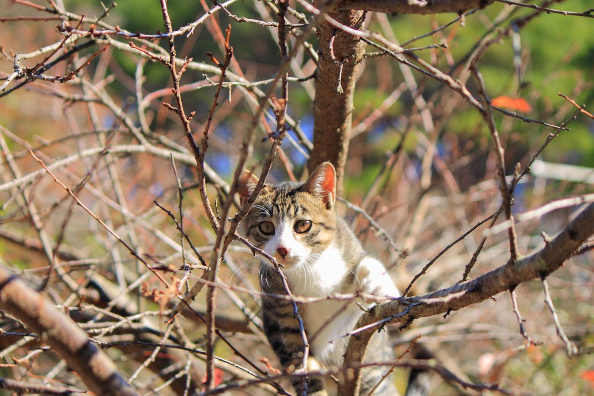 木の上から見つめる子ネコ