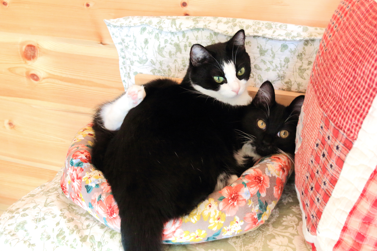2匹になった猫ベット