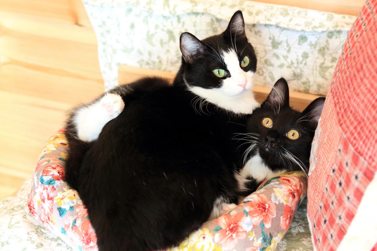2匹になった猫ベットをもう少しアップで
