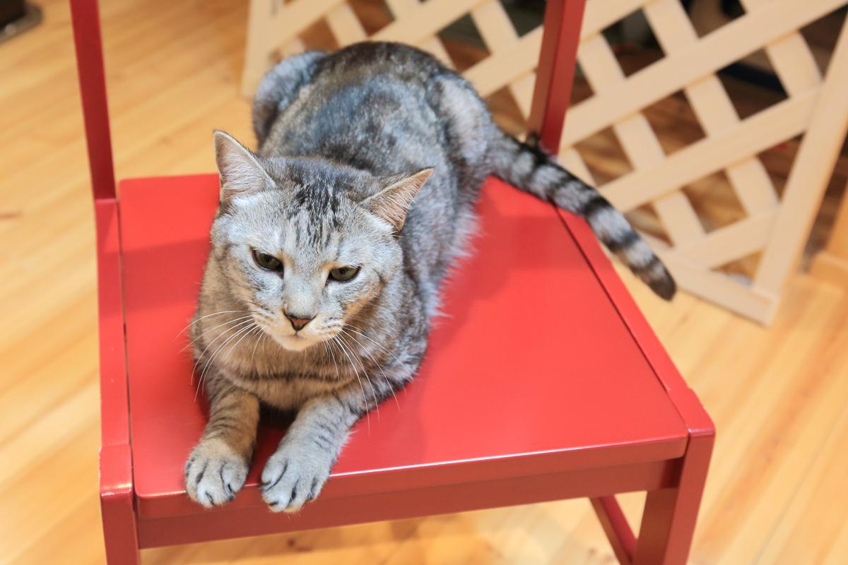 赤い椅子の上で甘笑顔のチノ