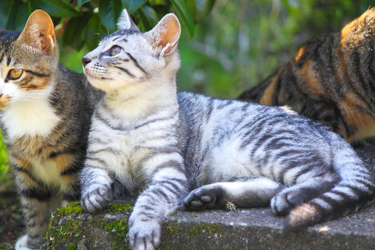 兄弟猫はミケとキジトラ