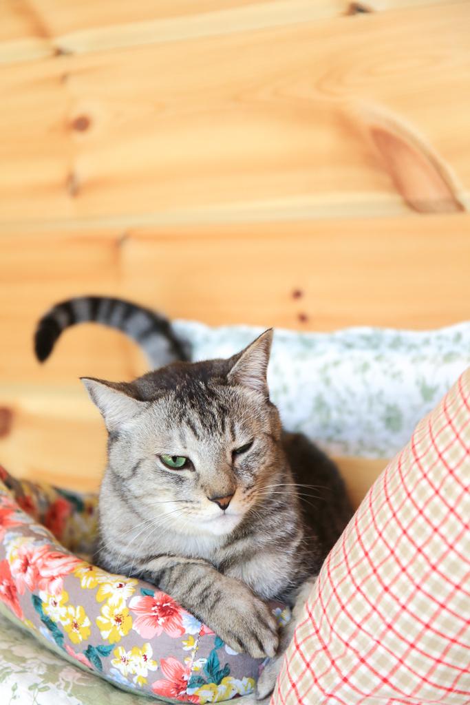お気に入りの猫ベッドでご機嫌