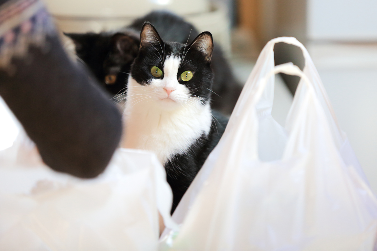 買い物袋の間から顔をだすピノ