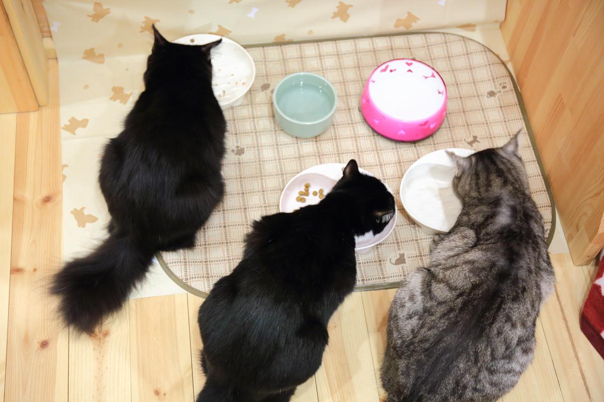 3匹の食事風景