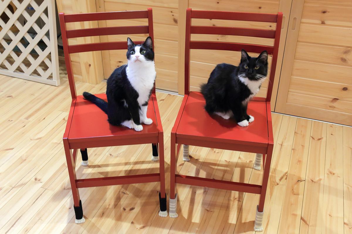 椅子の上にいるピノとそぼろ