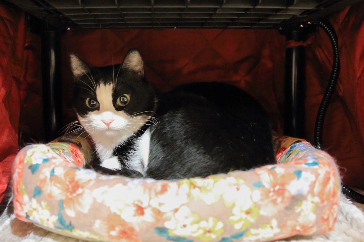 猫コタツの中のベッドとピノ