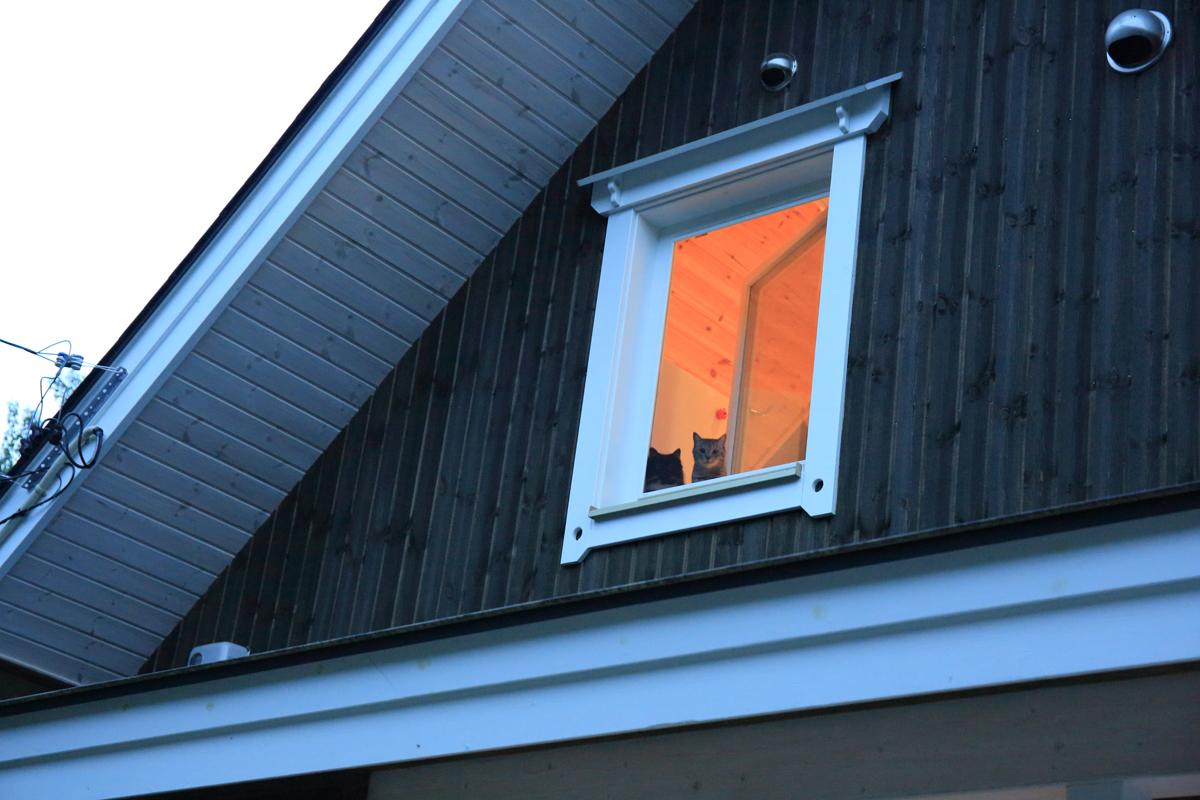2階の窓からこちらを見つめる2匹のネコ