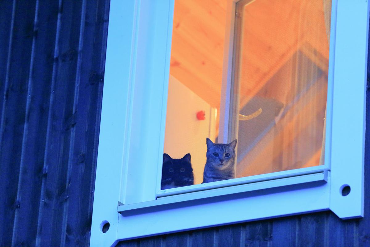 2匹のネコを望遠レンズで