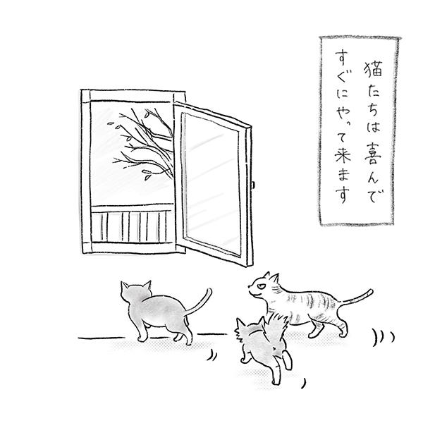猫たちが喜んでやってきます