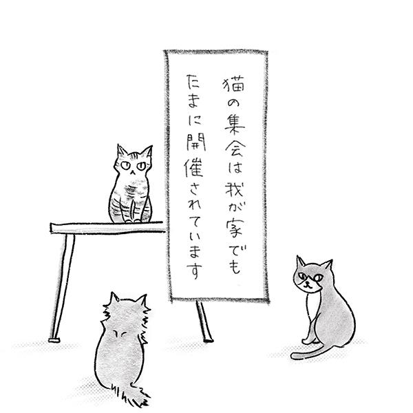 我が家でもよく開催される猫の集会