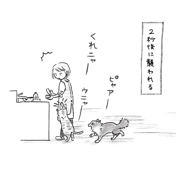 猫たちが2秒で飛んでくる