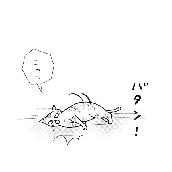 「ニャッ」バタン