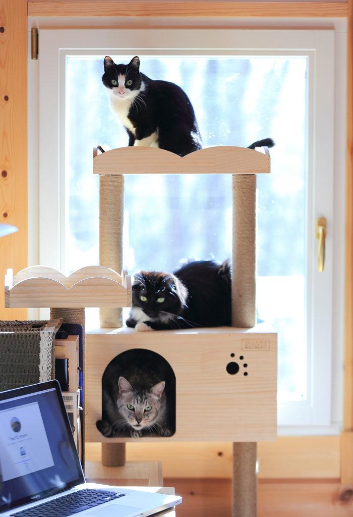 キャットタワーに集結する三匹